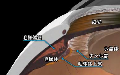 目の部位のイメージ